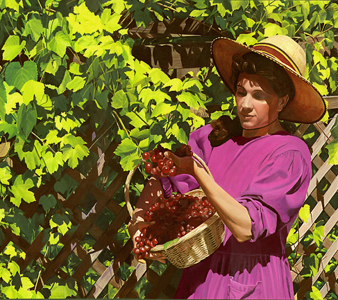 grape-harvest.jpg