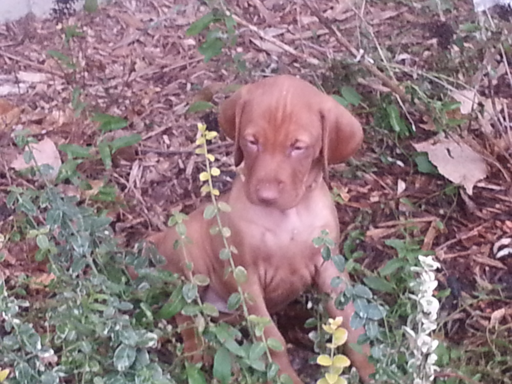 Ruby (from foxcrestdk)