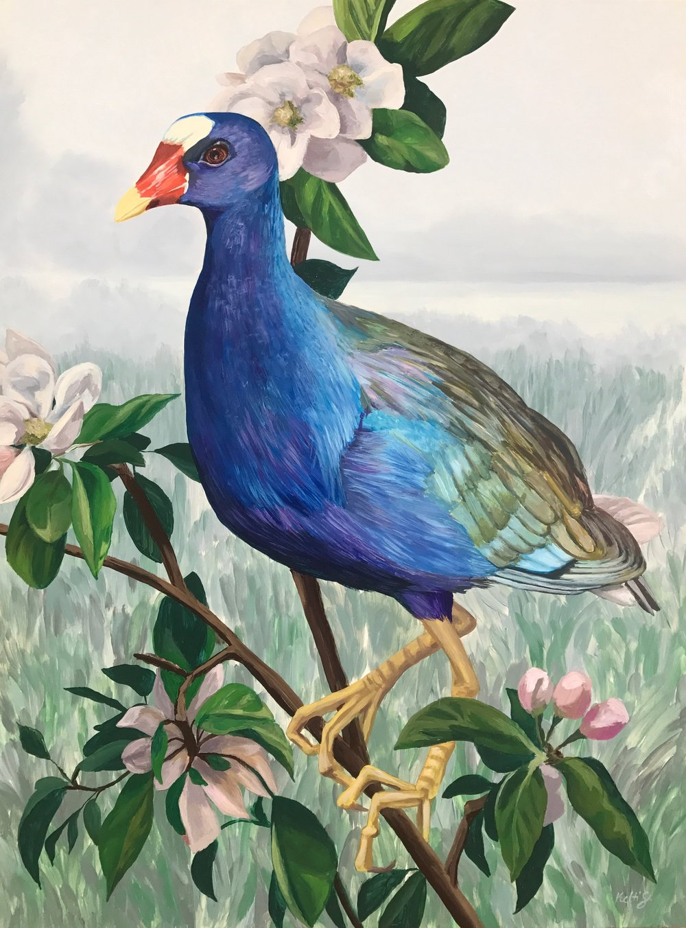 Purple_Gallinule.JPG
