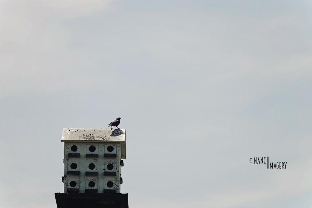 Bird on a birdhouse