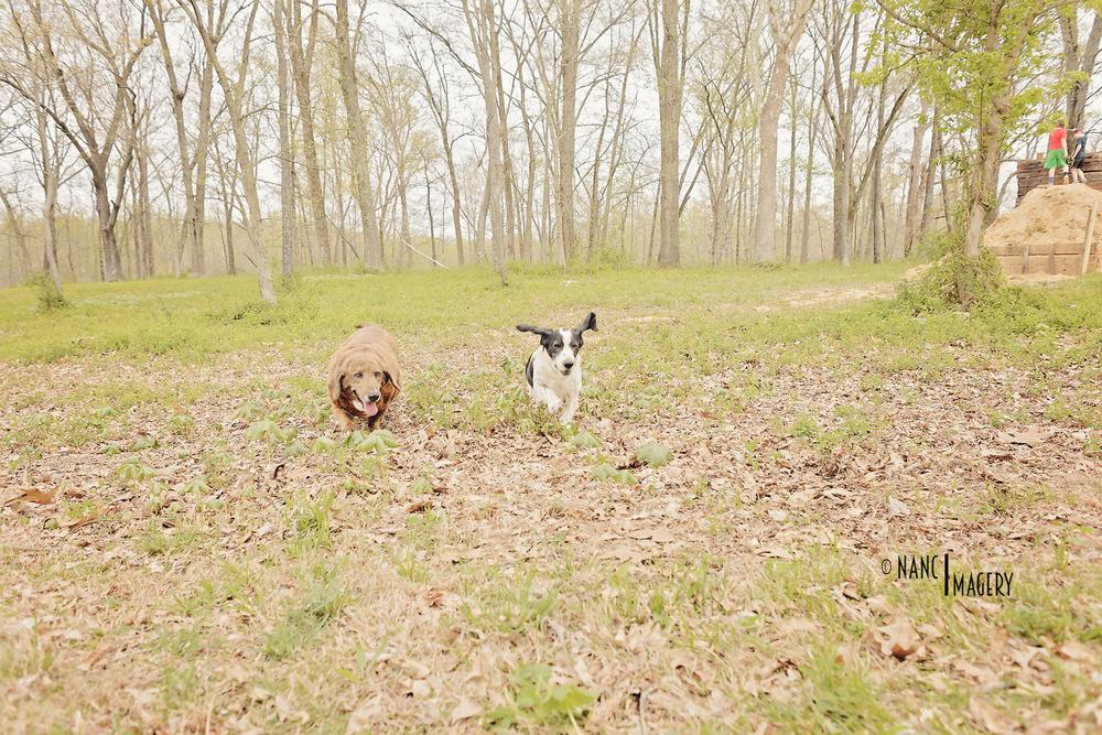 Spring Illinois Trip 2016-7231 copy.jpg