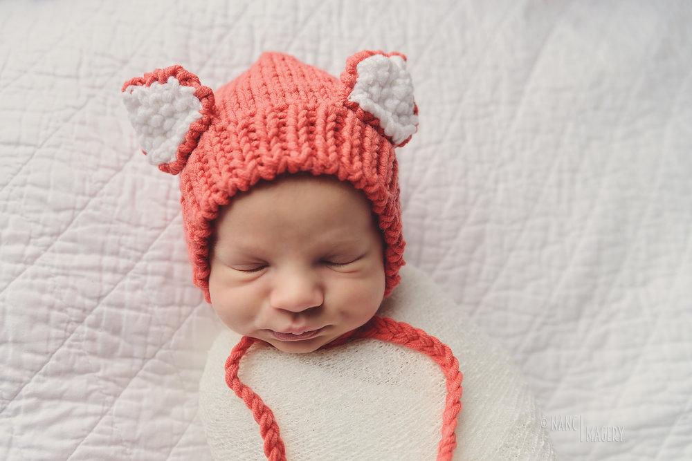 Newborn fox