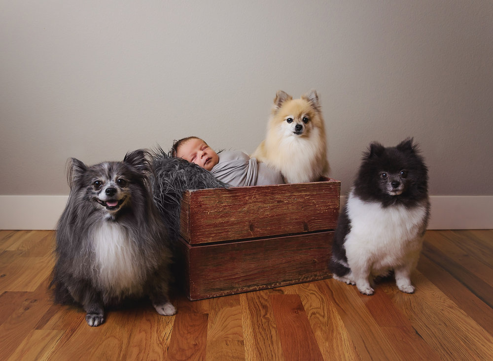 Newborn baby boy with dogs siblings