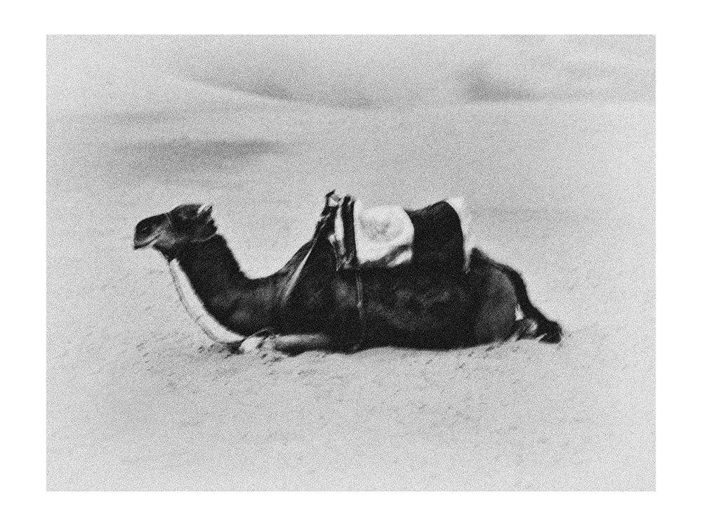 Camel in Sahara %22Karawan%22.jpg