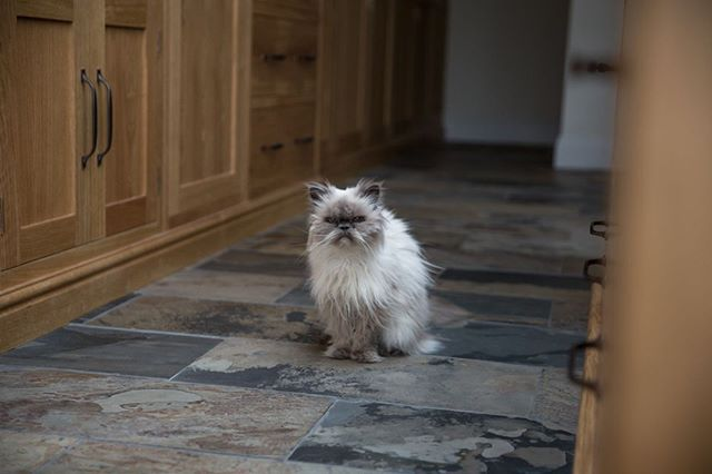 I met this little fluff ball on a recent shoot for @eviewillowkitchens. He might not look too happy, but I think he was secretly loving his new kitchen!⠀ .⠀ .⠀ .⠀ .⠀ #interiorphotography #interiorphotographer #photography #photographerslife #PhotographersOfInstagram #photographersofIG #countryliving #countryhome #interiordesign #interiorstyling #dreamhome #roomforinspo #kitchendesign #kitchendecor #kitchencabinets #kitcheninspiration #kitcheninterior #eviewillowkitchens #bespokekitchens #handpaintedkitchen #beautifulkitchen #handmadekitchen #kitchenstyle #paintedkitchen #paintedkitchencabinets #shakercabinets #shakerkitchen #catsofinstagram #catslife #petsofinstagram