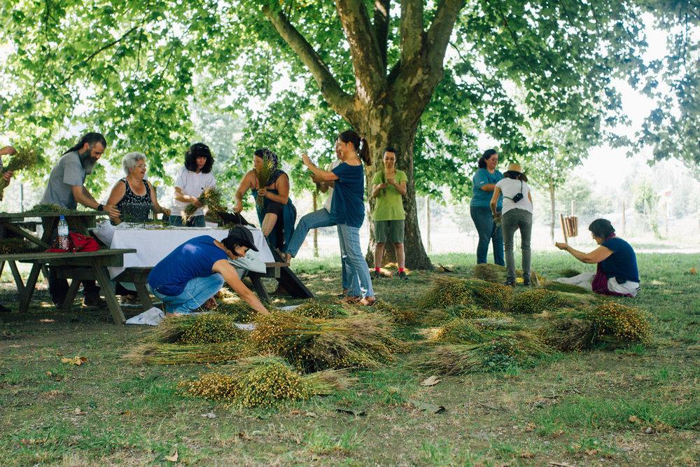 O importante no dia da colheita é trabalhar em equipa. / The most imporatnt thing for the harvest is team work.