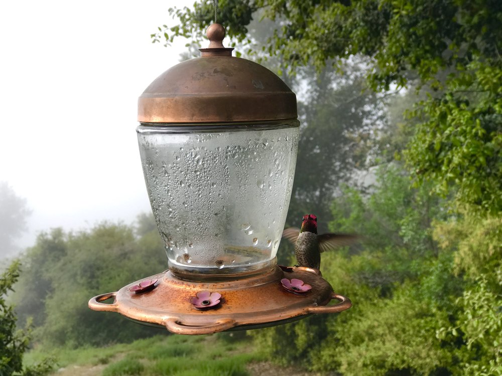 Spring Hummingbird
