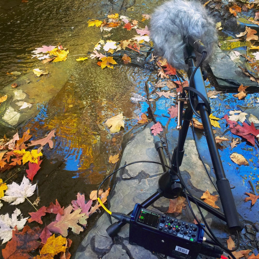 Fall recording in Ohio.