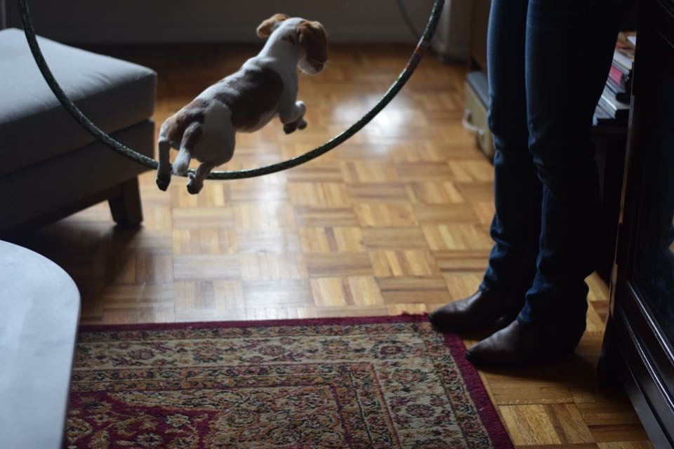 My dog Watson!