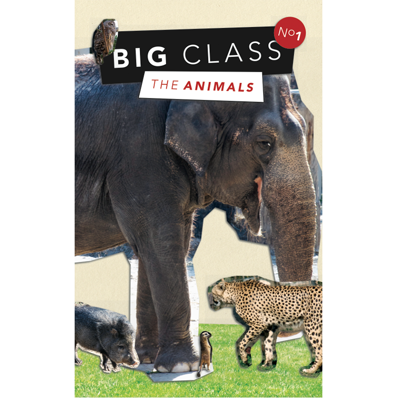 The first Big Class book had a theme chosen by its 6 and 7-year-old authors; animals doing things they would not normally do. The young writers wrote five-sentence stories which were sent to 35 artists from all over the place to be illustrated. The book was beautifully laid out and designed, then published and sold in stores. A release event was held at the local library in which the students read their stories and signed copies of their book for 150 fans (aka family members). The book, Big Class No. 1: The Animals, sold out its initial 250 copy run at independent bookstores in New Orleans.