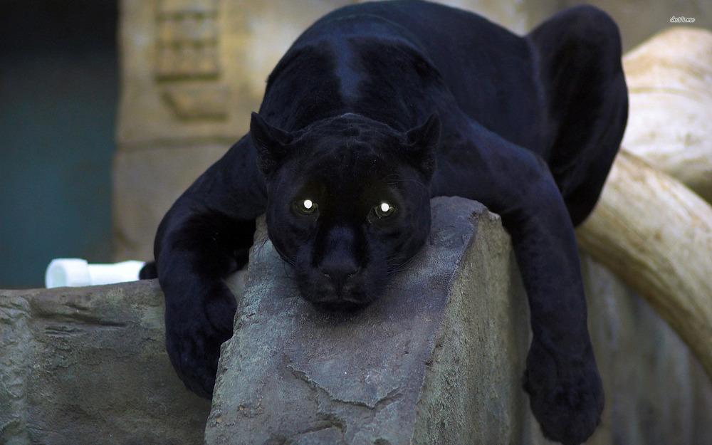 Wallpaper-Black-Panther-Picture-05.jpg