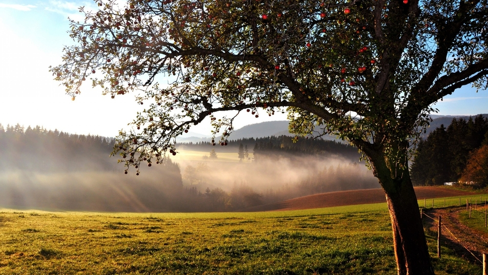 stunning-valley-10092-1920x1080.jpg