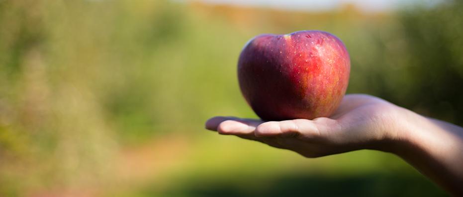 nh-food-photographer-apple-picking-1-.jpg