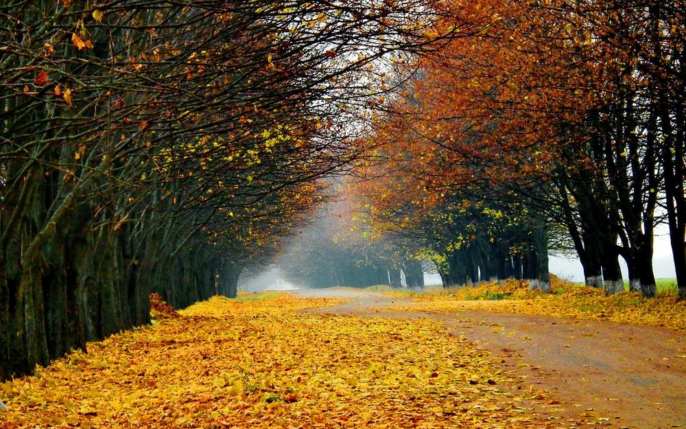 ws_Falling_Leaves_Autumn_Way_1920x1200.jpg