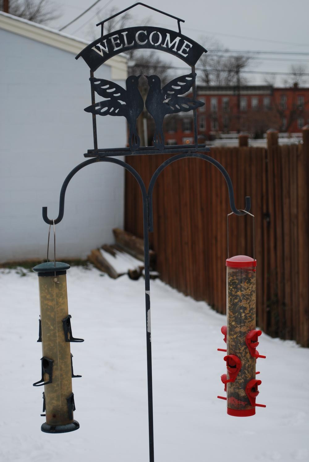 backyard birdfeeders