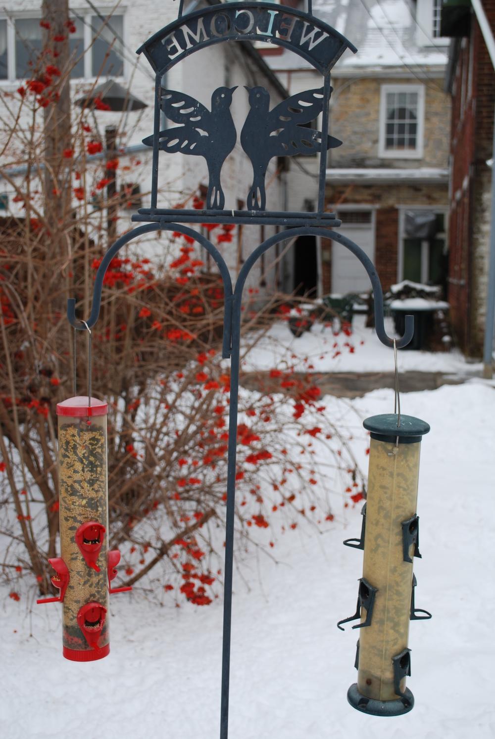 backyard birdfeeders and cranberry bush