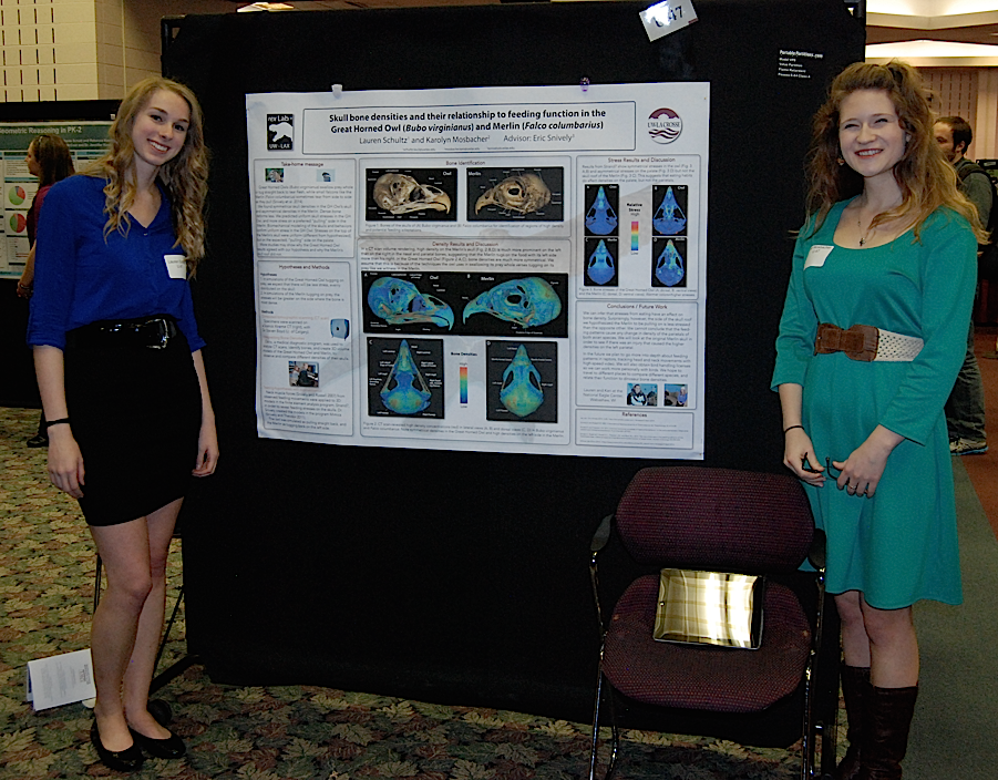Lauren Schultz and Kari Mosbacher correlate owl and merlin feeding styles with bone density and stresses.