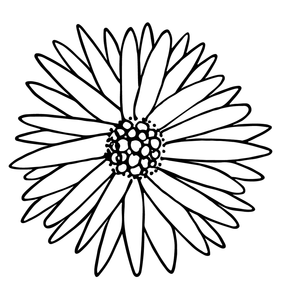 Aster Flower Sketch by Amanda Gomes • delightedco.com