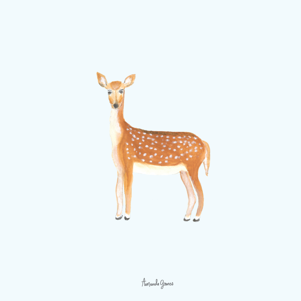 Deer Illustration by Amanda Gomes • Delighted Creative Co.