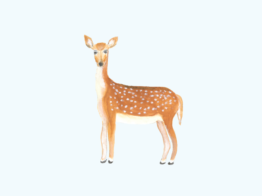 Deer Illustration ©Amanda Gomes • Delighted Creative Co.