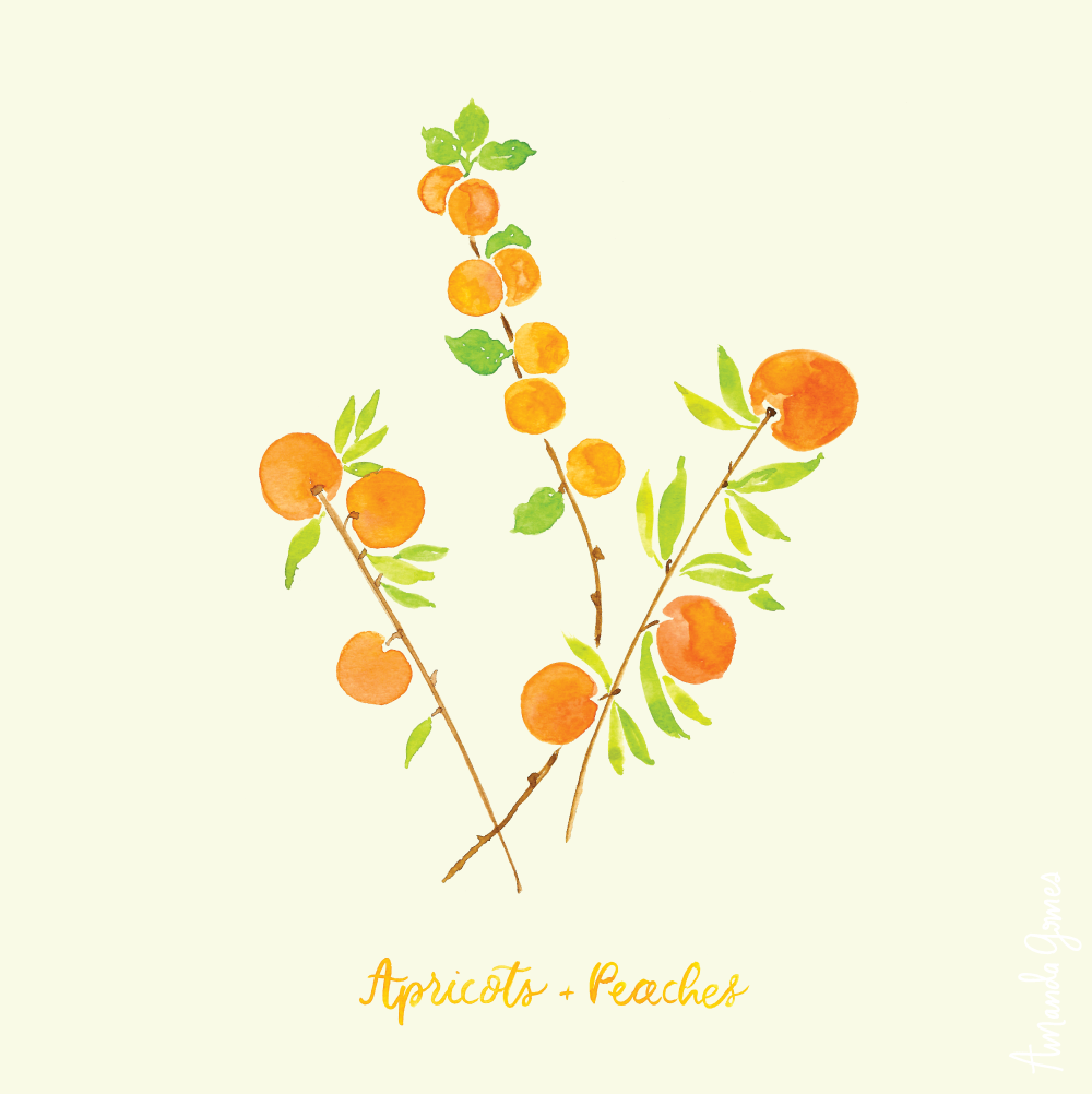 Apricot + Peaches Illustration by Amanda Gomes • Delighted Creative Co.
