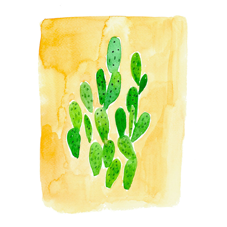 Copyright Amanda Gomes • watercolor succulent illustration