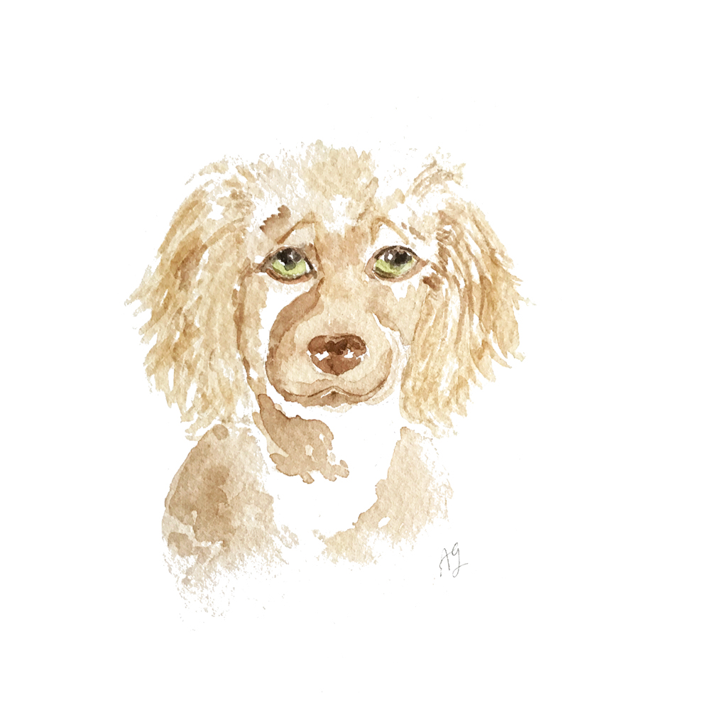 Custom Pet Portraits • Dog Illustration by Amanda Gomes • amandagomes.com