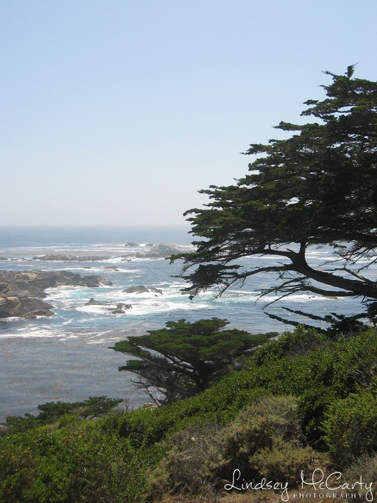 California_psewl_123_2353.jpg