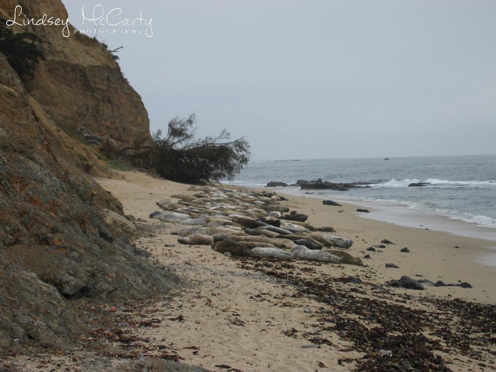 California_psewl_124_2485.jpg