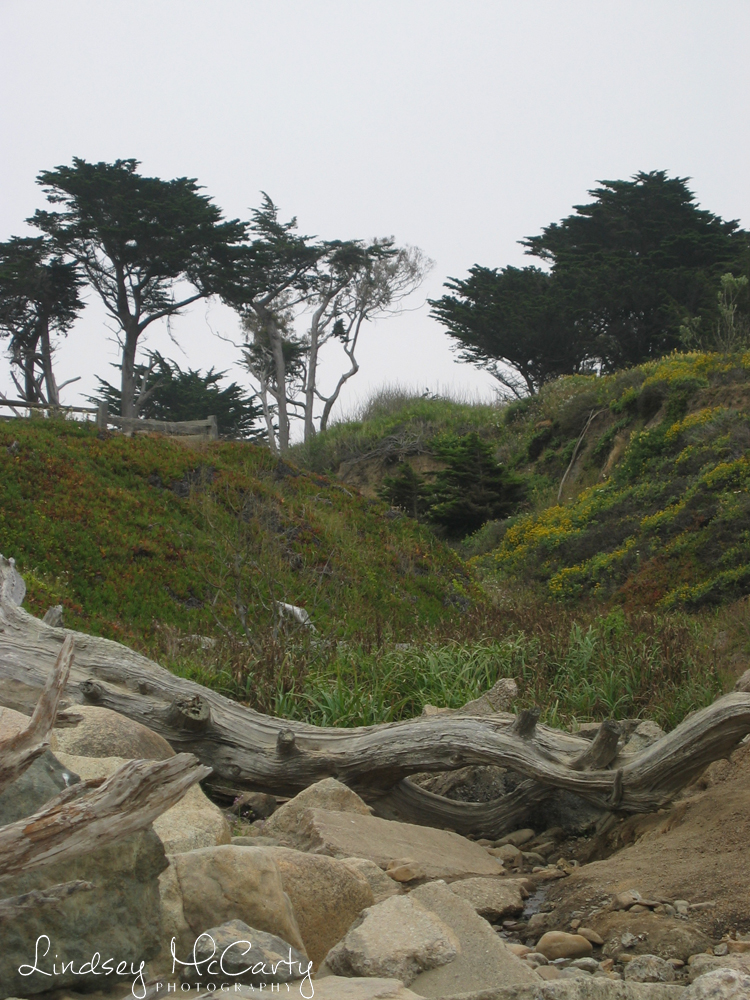 California_psewl_124_2499.jpg