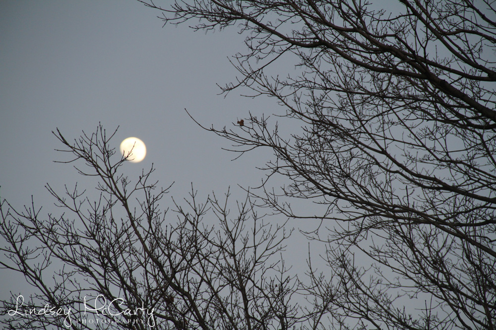 2014_Nature pse_9974.jpg
