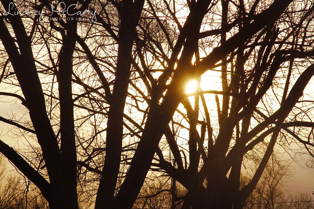 2014_Nature pse_0057_2015.jpg