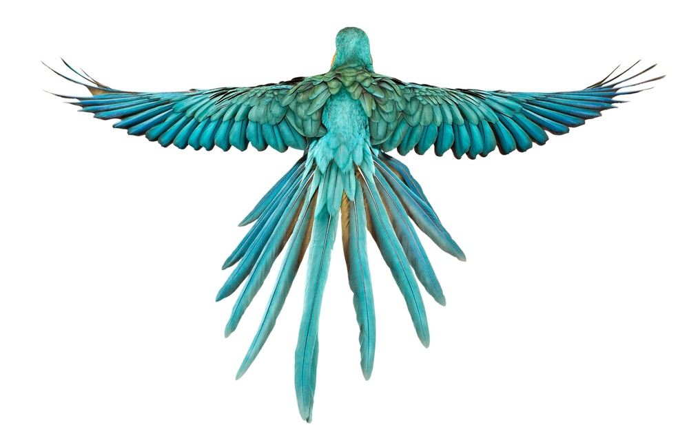 D G Parrott  Andrew Zuckerman: Bird...
