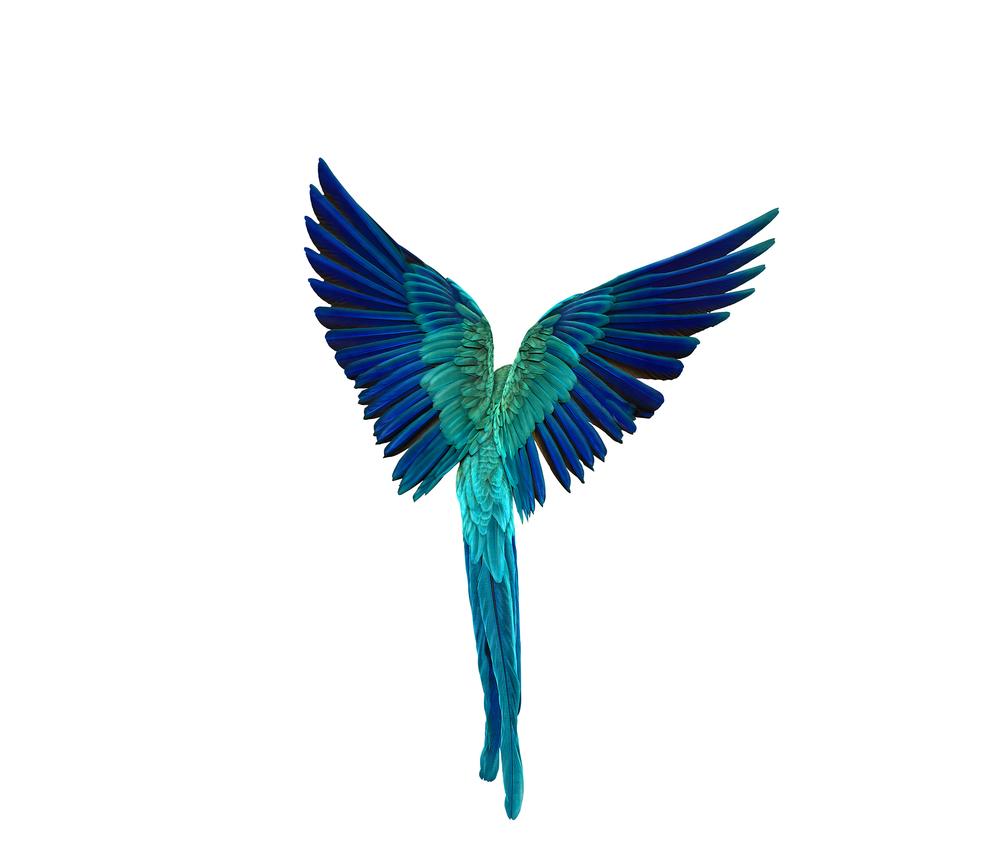 bird_044_v6.jpg