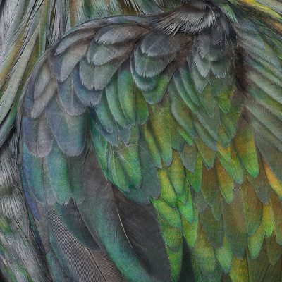 Andrew Zuckerman: Birdman