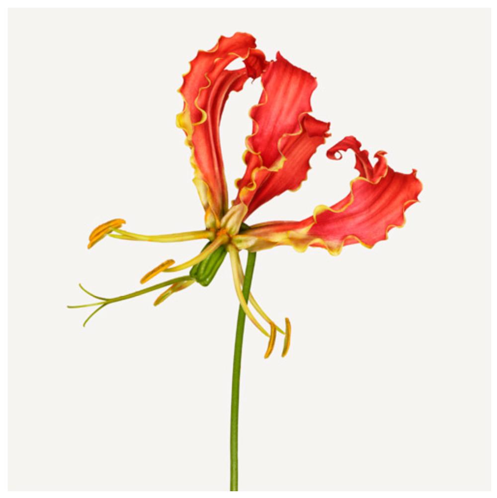 Zuck flower.png