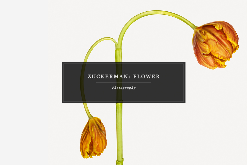 Zuckerman-Flower-orange-btr.jpg