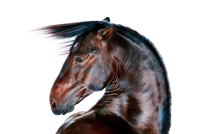 Jill Greenberg: Horse