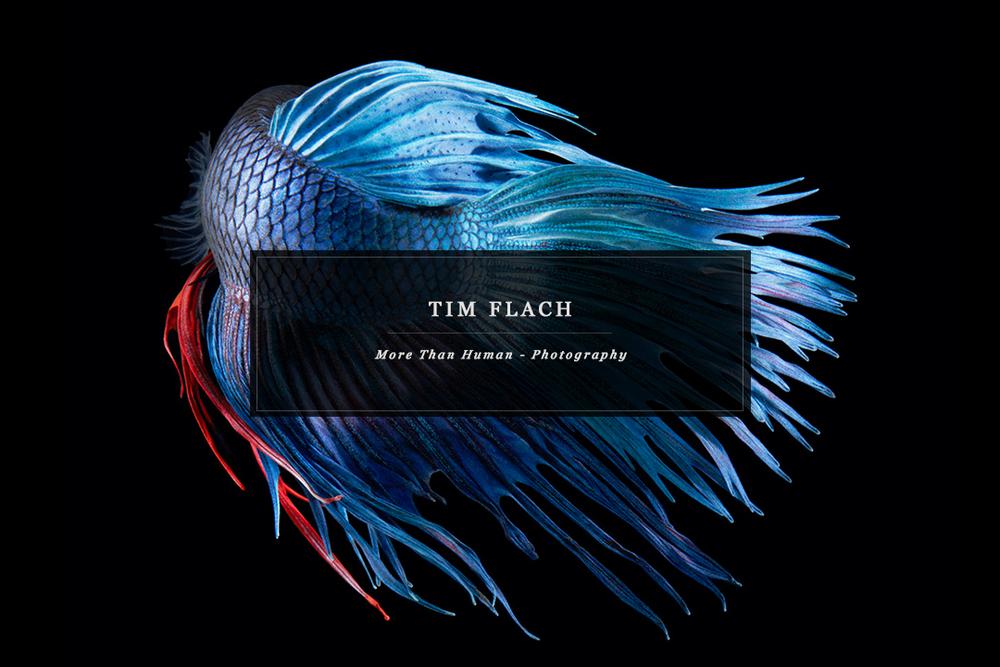 Flach-human-Home-2.2b.jpg