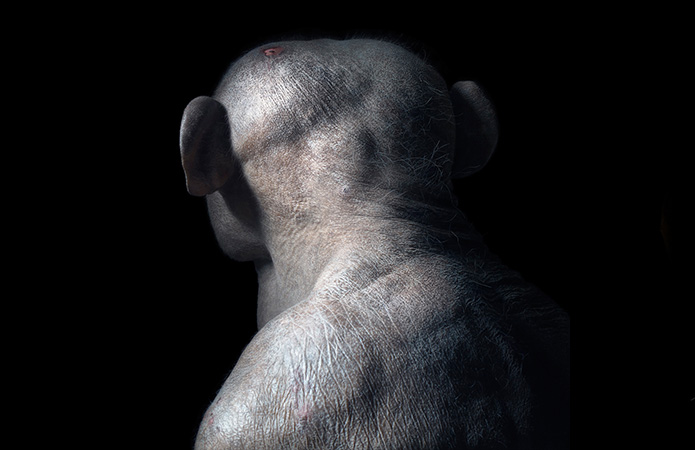 Tim Flach: More Than Human