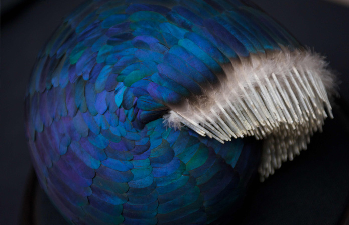Kate MccQwire: Feathers and Fascination