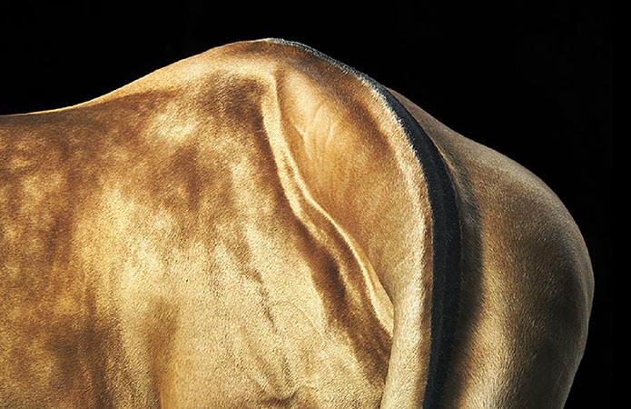 Tim Flach: Equus