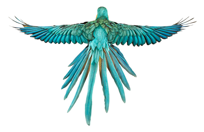 Andrew Zuckerman: Bird Man