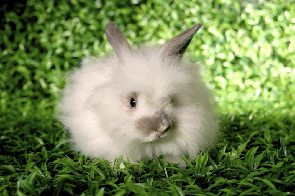 sacrifice-bunny.jpg