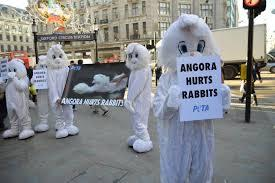 H&M, Gap, TopShop & more: Fashion retailers stop selling angora wool products   Following allegations that suppliers in China were mistreating rabbits during the production of angora wool in November 2013, multiple  global fashion retailers  have removed angora products from stock and suspended sourcing. More than 30 brands, including H&M, Forever 21 and Topshop (who received a petition with more than 100,000 signatures), committed to removing angora products, with ASOS, Mango and John Lewis implementing permanent bans in the UK. Other retailers, including Tommy Hilfiger and Calvin Klein, committed to global bans. The original video footage was released by animal-rights organization PETA and was widely circulated on social media.