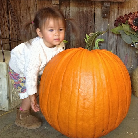 Found her pumpkin!