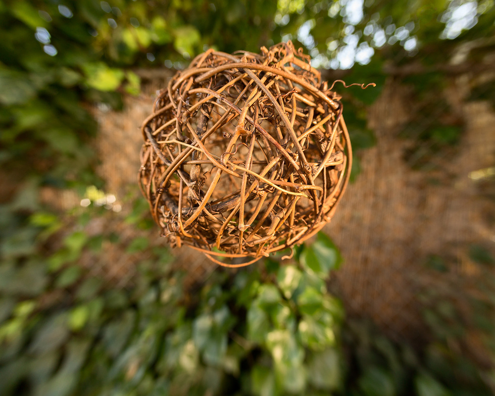 WoodOrb_TreeBG.jpg