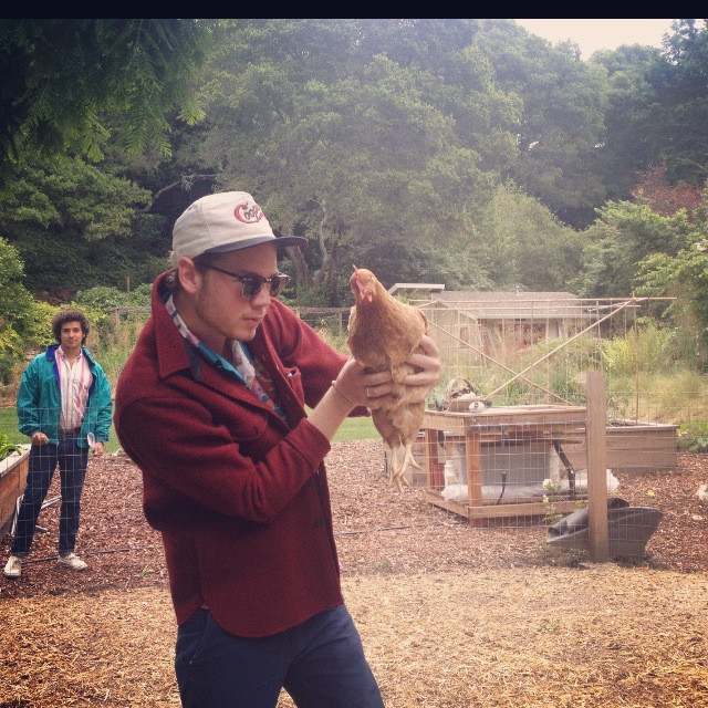 Checking on my chickens with harry