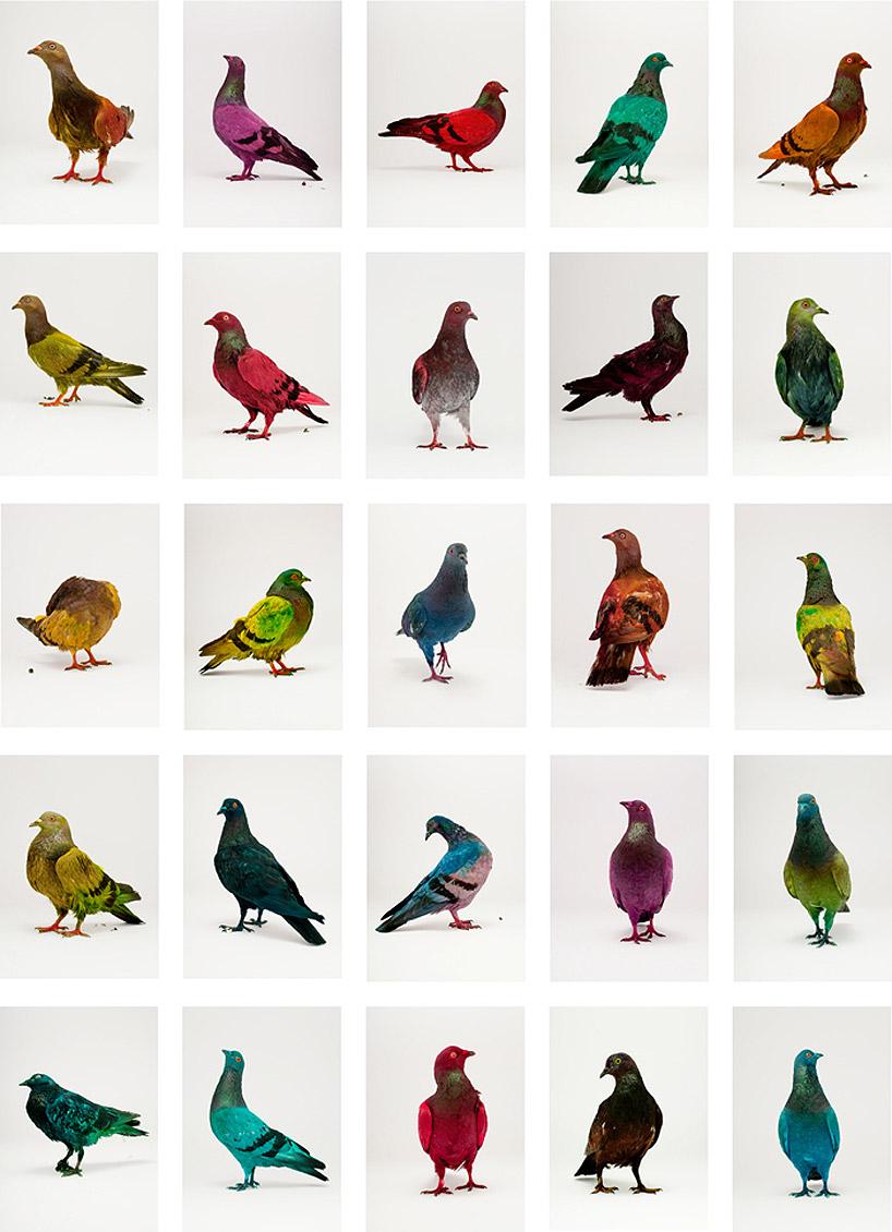 paint the pigeons