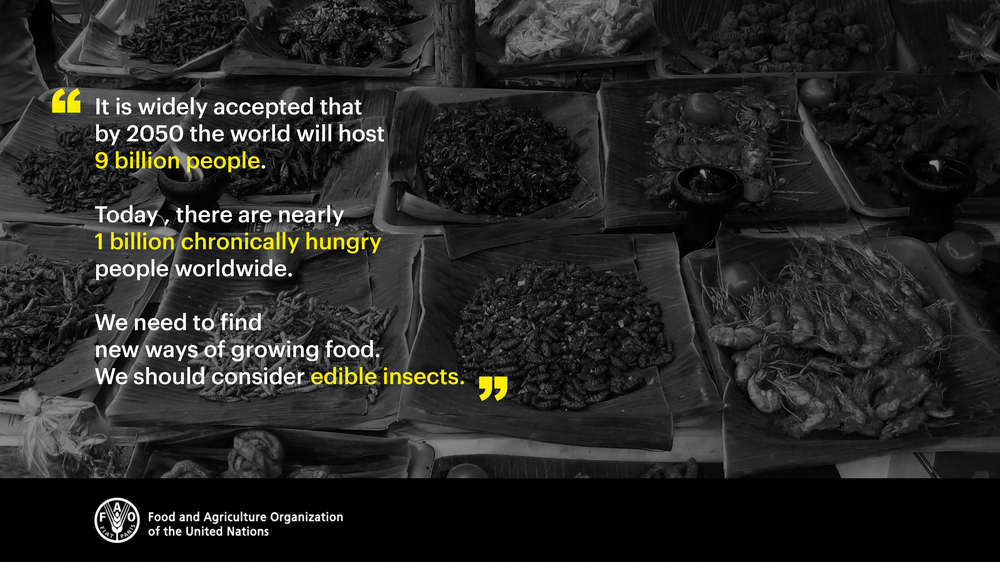 UN_report_edible_insects